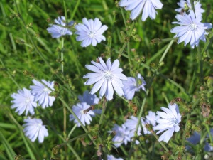 These purple-bluish flowers line the road.